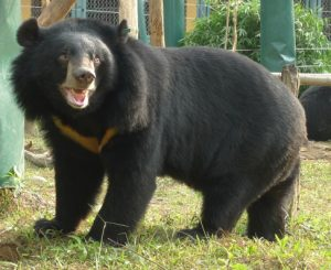 Moon Bear Pictures
