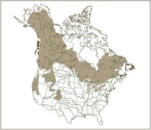 American Marten Habitat