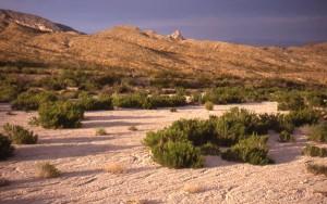Western Diamondback Rattlesnake Habitat