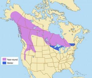 Great Grey Owl Range