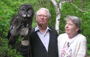 Great Grey Owl Size