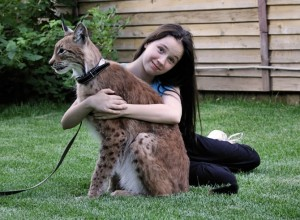 Eurasian Lynx Pet