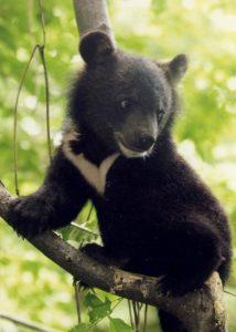 Baby Moon Bear