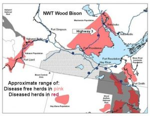 Wood Bison Range