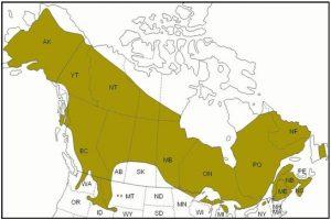 Spruce Grouse Range