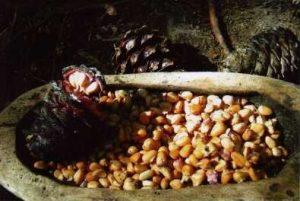 Whitebark Pine Nuts
