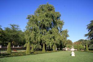 Montezuma Cypress Pictures