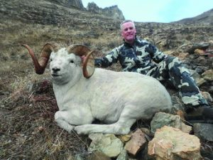 Dall Sheep Size