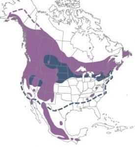 Red Crossbill Range
