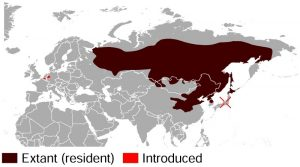 Siberian Chipmunk Range