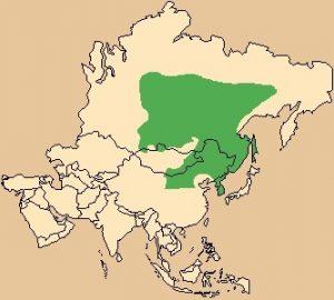 Siberian Musk Deer Range